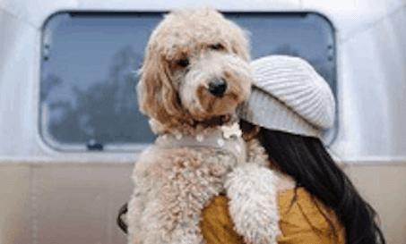 dog_policies_hero-e1602712207472