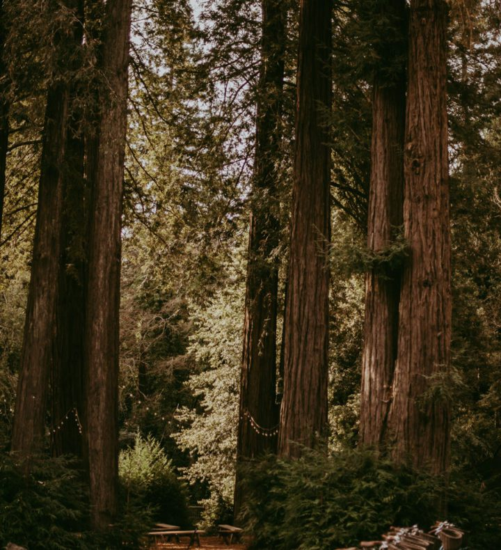 Redwood-trees-and-hammock-at-AutoCamp